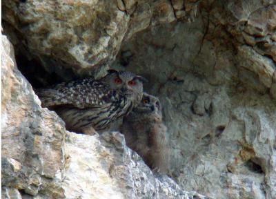 Ornithologen, die in den Mond gucken