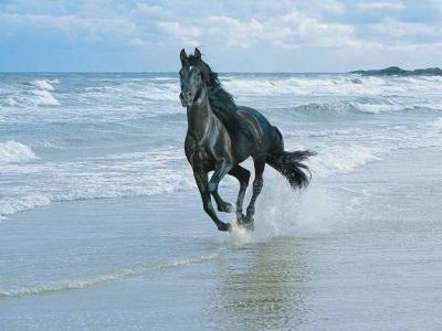 cheval courant sur l eau - passion chevaux