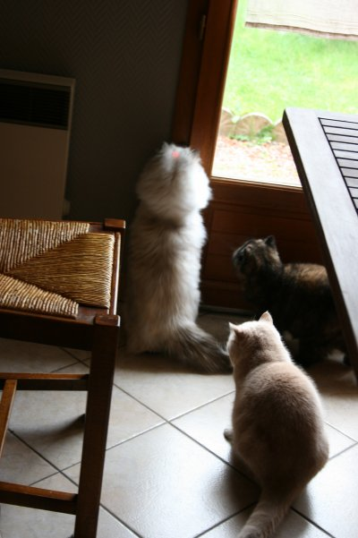 jeux de chats...