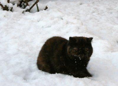 DIXIE, ELISA ET FEEBEE ont joué à la neige (juste un peu lol)