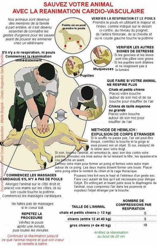 Parce que ça peut être utile et sauver un chien.