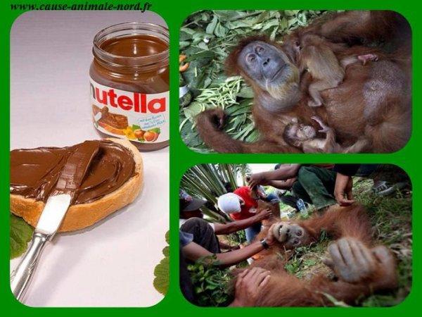 Boycottons les produits à base d'huile de palme.