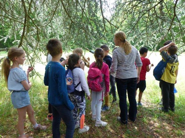 Faire connaître la forêt aux élèves de Compiègne