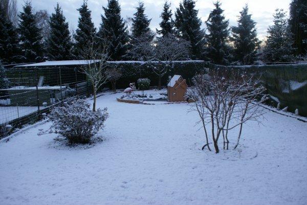 voila mon jardin sous la neige