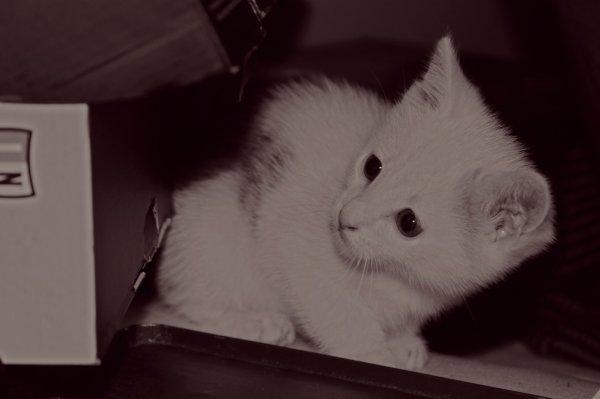 Mi gatito Sancho
