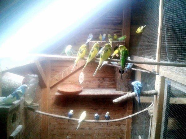 volière intérieur perruche