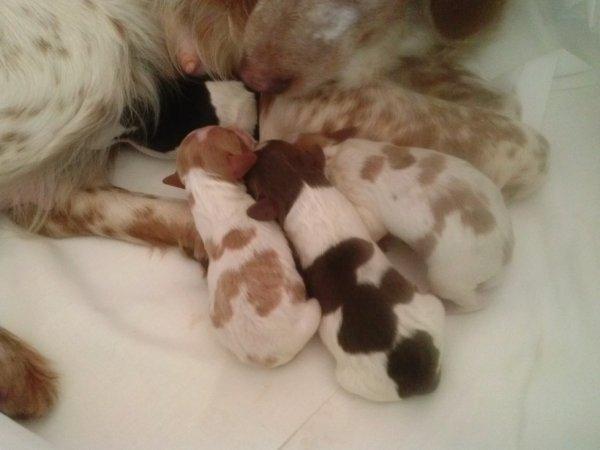 Petite naissance