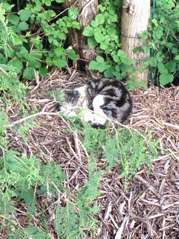 Un petit chat tout mignon <3