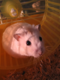 Photo de xxHamster-Jumperx3