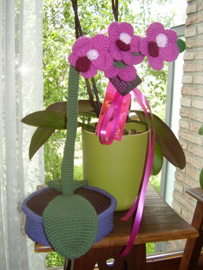 une orchidée qui ne fane pas