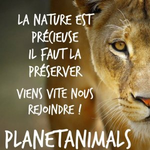 No. 16 - Planet Animals