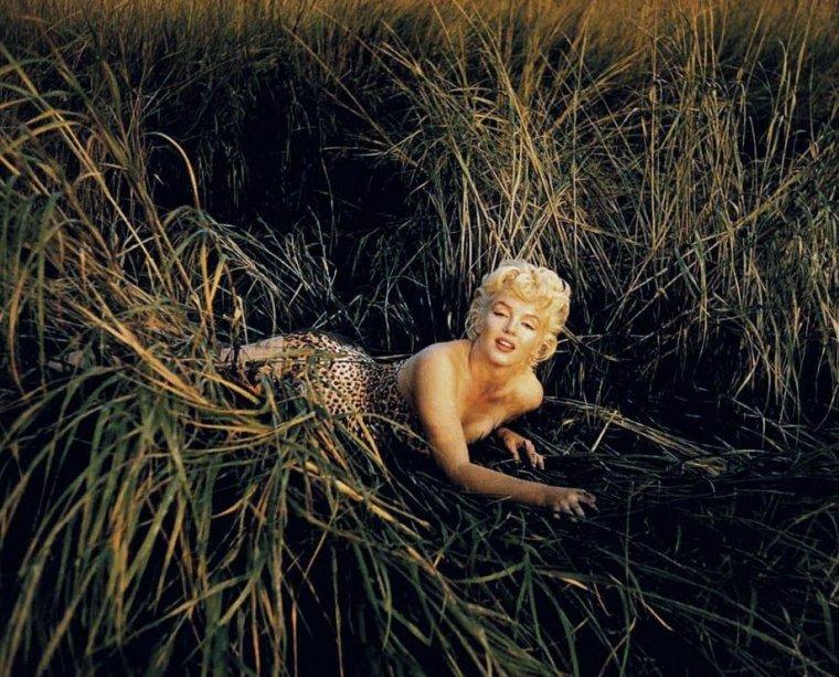 Quand l'imprimé léopard s'invite partout... So vintage ! (de haut en bas) Marilyn MONROE / Romy SCHNEIDER / Lana TURNER / Bunny YEAGER / Cyd CHARISSE / Jayne MANSFIELD / Gene TIERNEY
