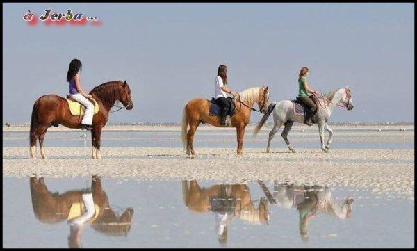 L'île de Djerba