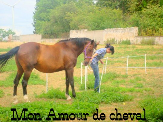 Mon Amour De Cheval