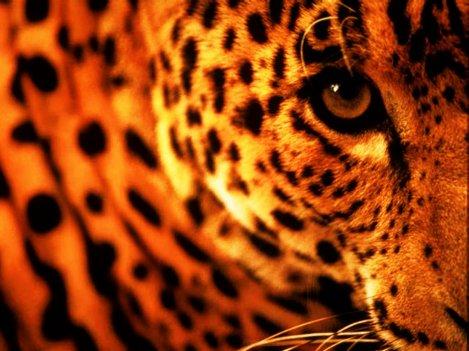 > Cobaye : Animal d'essais qui devient un animal décès.  [Serge Mirjean] Et si on arrêtait toutes ces expériances inutiles ?
