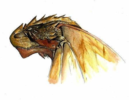 Tête de Dragon des Sables