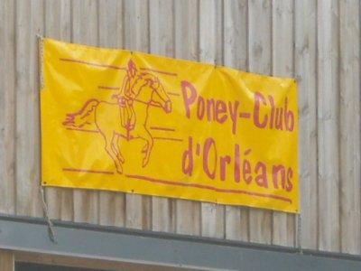 Voici les chevaux du Poney club d'Orléans