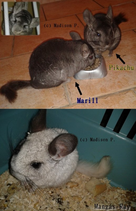 My Lovely Pets =)