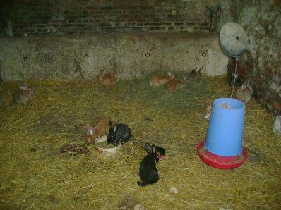 Femelles 2011 (Portées 1,2,3,4)