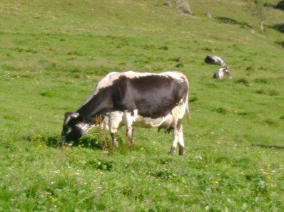 Vacances 2011 - La Vosgienne
