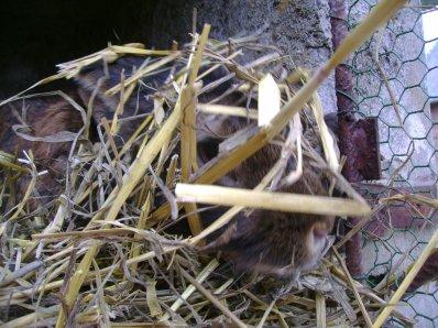 Tulipe qui fait son nid !!!