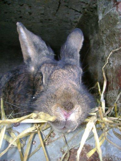 Tulipe fait son nid !!!