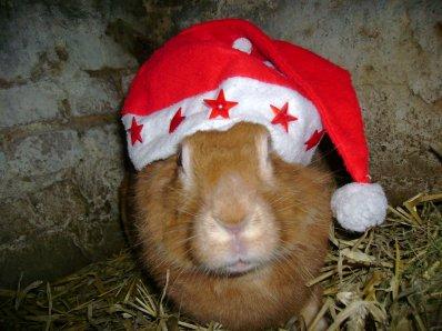 Les Lapins aussi fêtent Noël !!! (Partie II)
