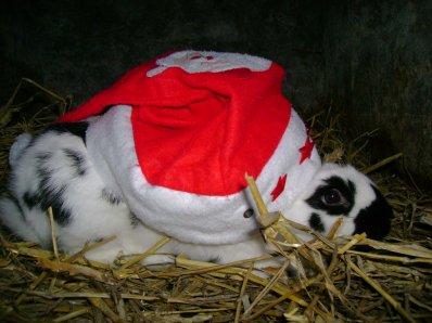 Les Lapins aussi fêtent Noël !!! (Partie IV)