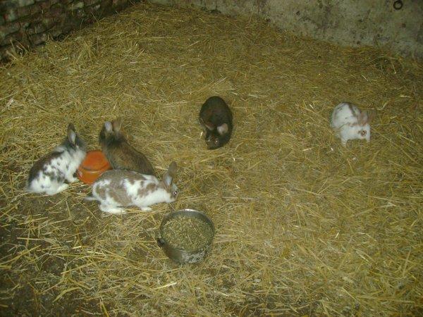 Mâles et Femelles 2011 (Portées 9,10,11)