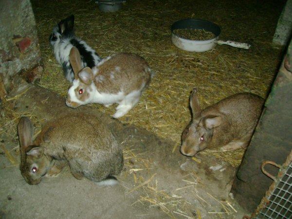 Mâles et femelles (Portées 9,10,11)
