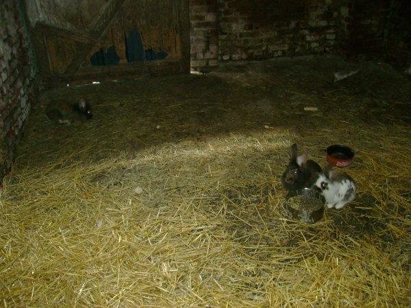 Femelles 2011 (Portées 9,10)