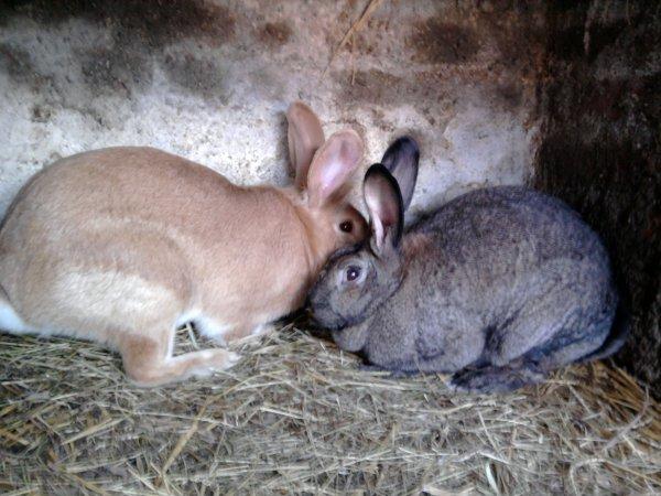 Coucky et la lapine d'un ami !!!