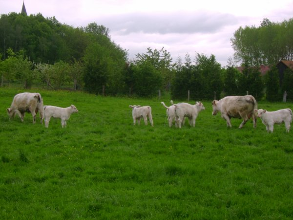 Vaches 2012