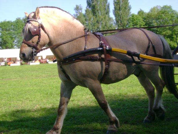 Cuts 2012 (catégorie 1 poney) ♥