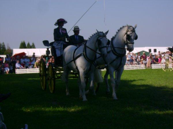 Cuts 2012 (catégorie 2 poneys) ♥