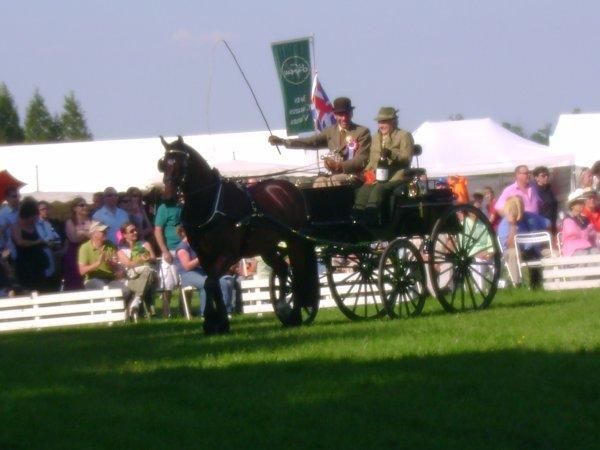 Cuts 2012 (catégorie 1 cheval) ♥