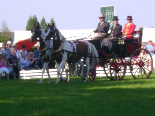 Cuts 2012 (catégorie 2 chevaux) ♥