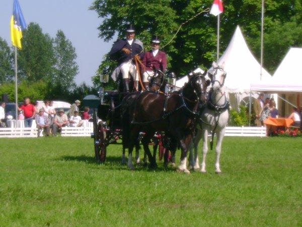 Cuts 2012 (catégorie 4 chevaux) ♥