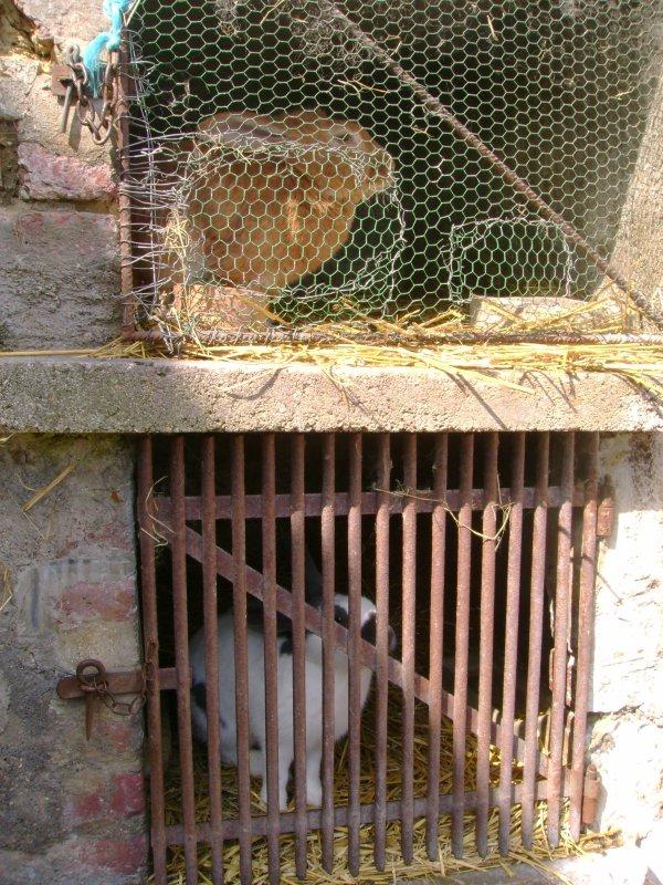 Mes lapins dans leur clapier !!!