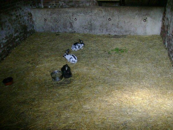 Femelles 2012 (1ère et 3ème portée 2012)