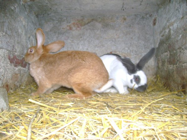 Nesquick et la lapine d'un ami !