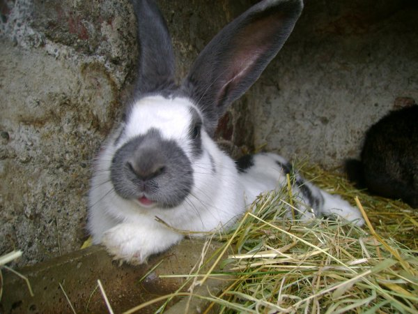 Nesquick et la lapine de ma tata !!!