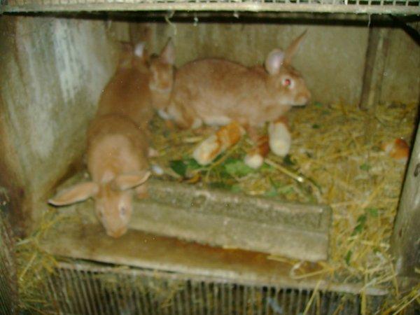 Lapereaux de Coucky et la lapine de ma tata !