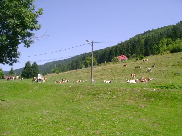Vacances 2012 - Les montbéliardes