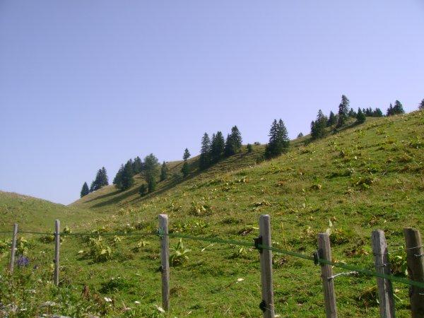 Vacances 2012 - Les alpages (partie 2)