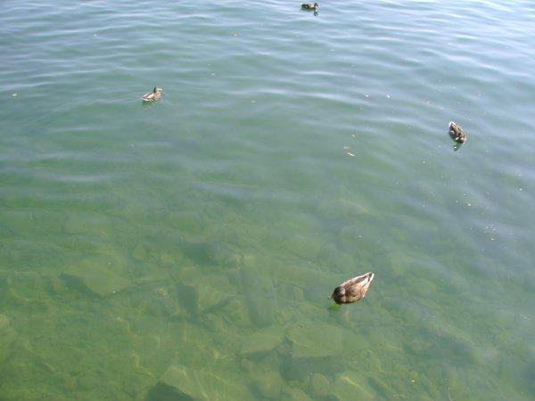 Vacances 2012 - Le lac Léman (Suisse)