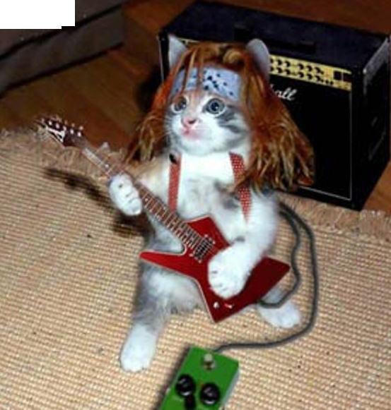 lil cat