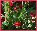 Everything begins with a  choice & Oleander Loves by Ocey begins here ...