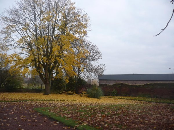 A chacun s'n'automne.