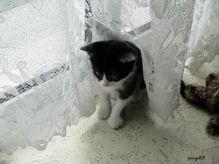 I FAUT AVOIR DES BONS YUS PO GARDER DES TIOTS CATS!